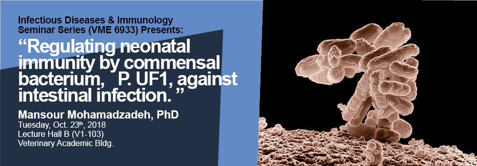 """Text reads: Infectious Diseases & Immunology Seminar Series (VME 6933) Presents: """"Regulating neonatal immunity by commensal bacterium, P. UF1, against intestinal infection. """" Mansour Mohamadzadeh, PhD; Tuesday, Oct. 23th, 2018; Lecture Hall B (V1-103); Veterinary Academic Bldg. Image: Low-temperature electron micrograph of a cluster of E. coli bacteria, magnified 10,000 times. Each individual bacterium is oblong shaped."""