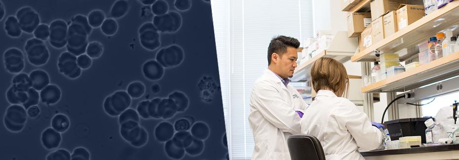 Dr. Dinglasan works in the lab