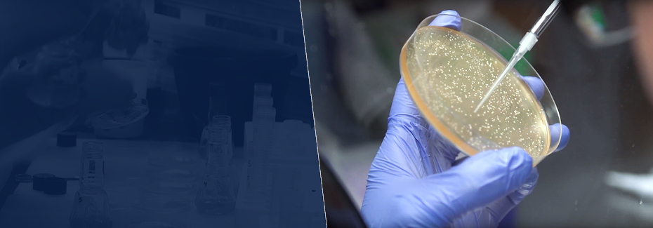Hand holds petri dish while a pipette is used